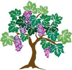 grapevine graphic